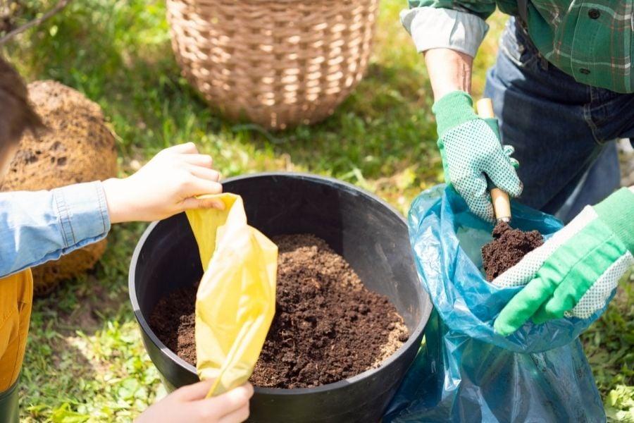 Transplanting plant into a new pot.  Pour fresh soil into the pot.