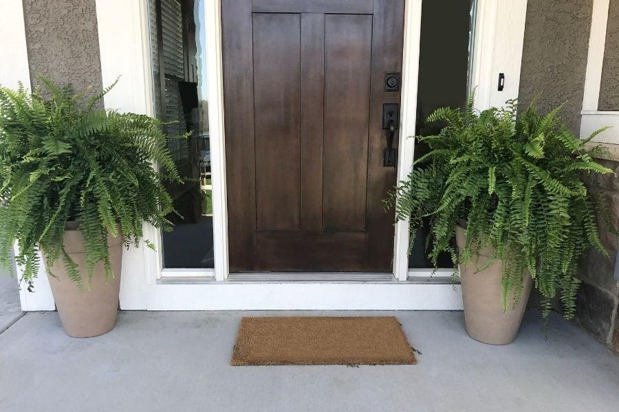 beautiful plants by door