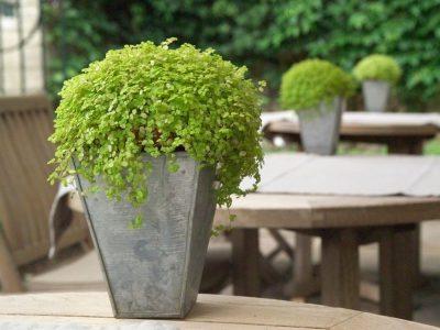 Outdoor Planter Arrangement Ideas: 18 Ways to Impress with Your Garden Pots