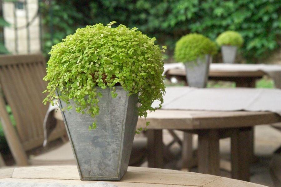 outdoor-planter-arrangement-ideas