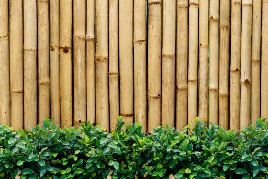 Bamboo fence garden