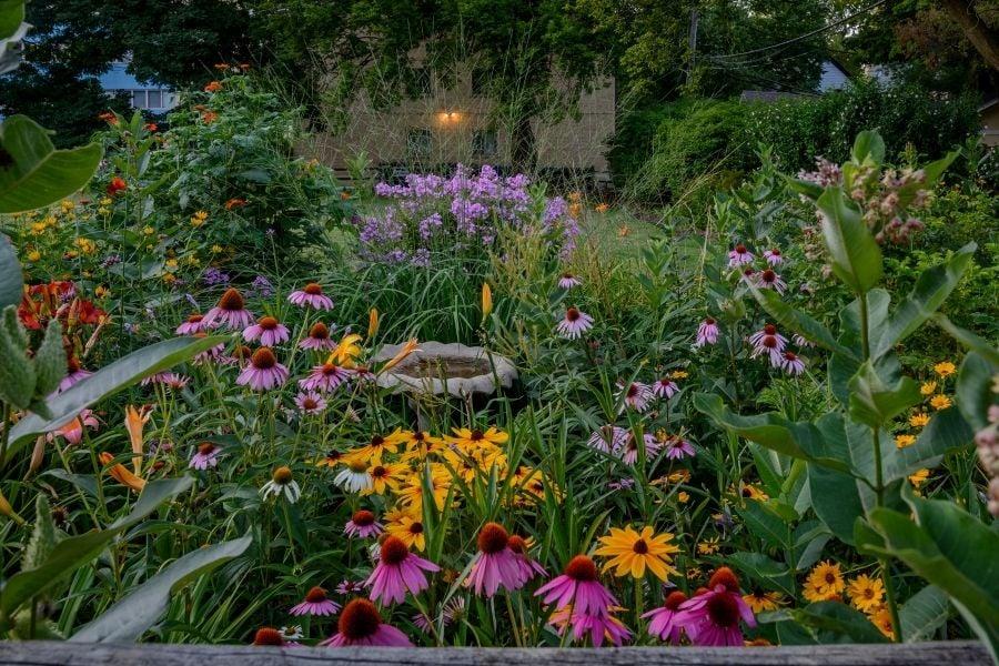Birdbath in the midst of a perennials garden in Evanston IL.