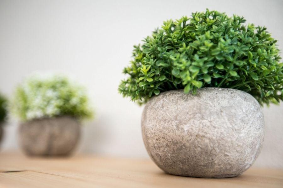 Faux plants in concrete pots