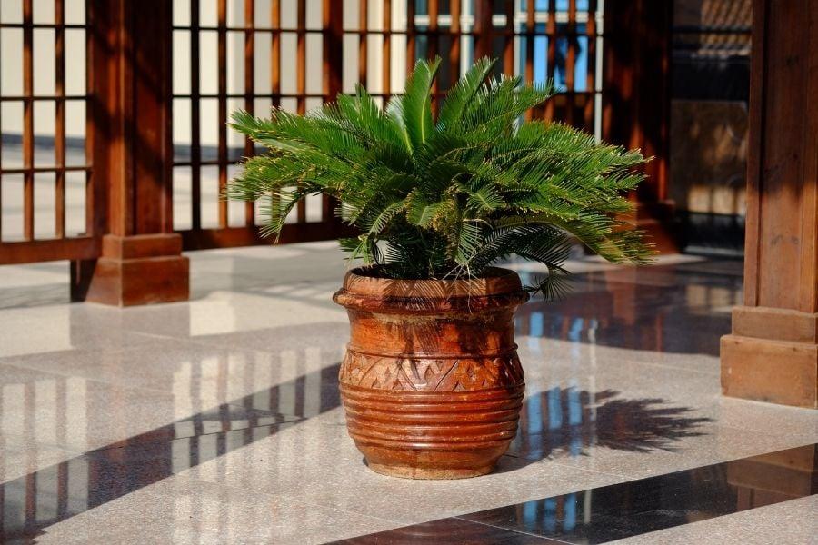 Plants in ceramic pot near hotel entrance