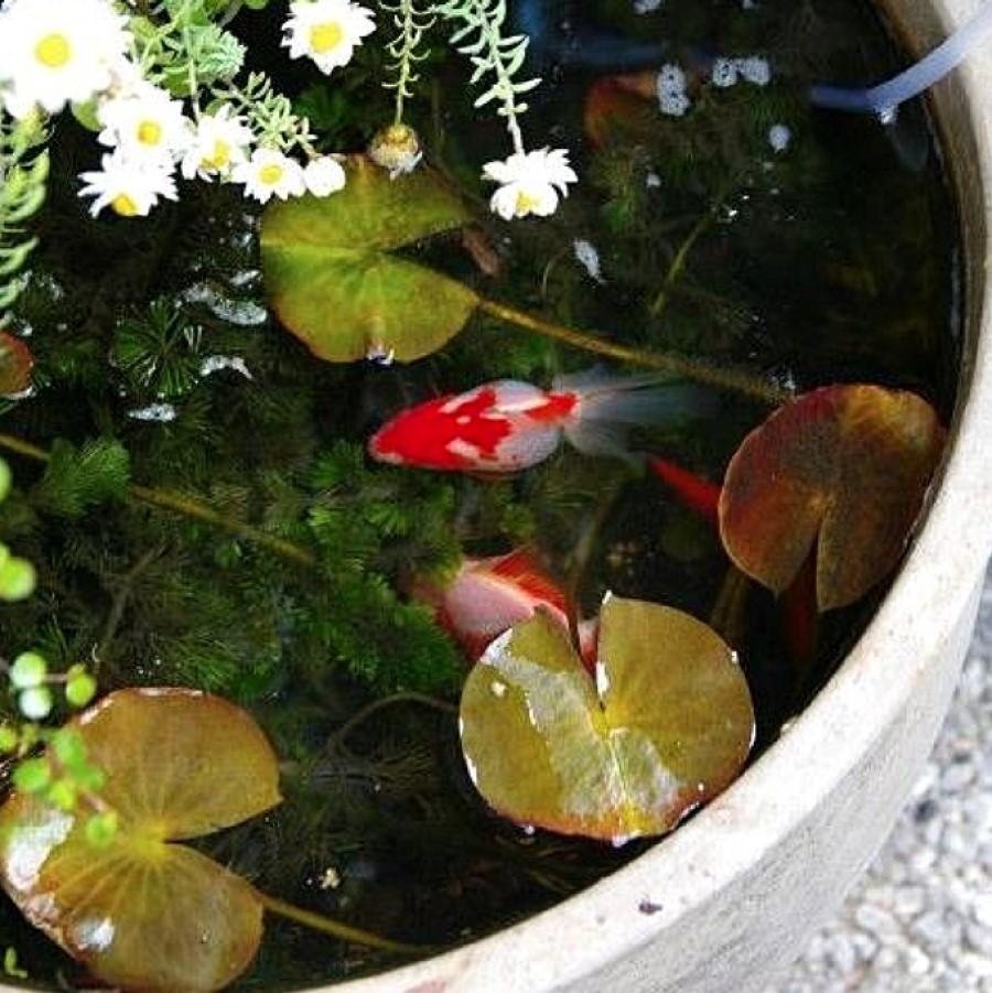 Aqua life of a fish in flower pots