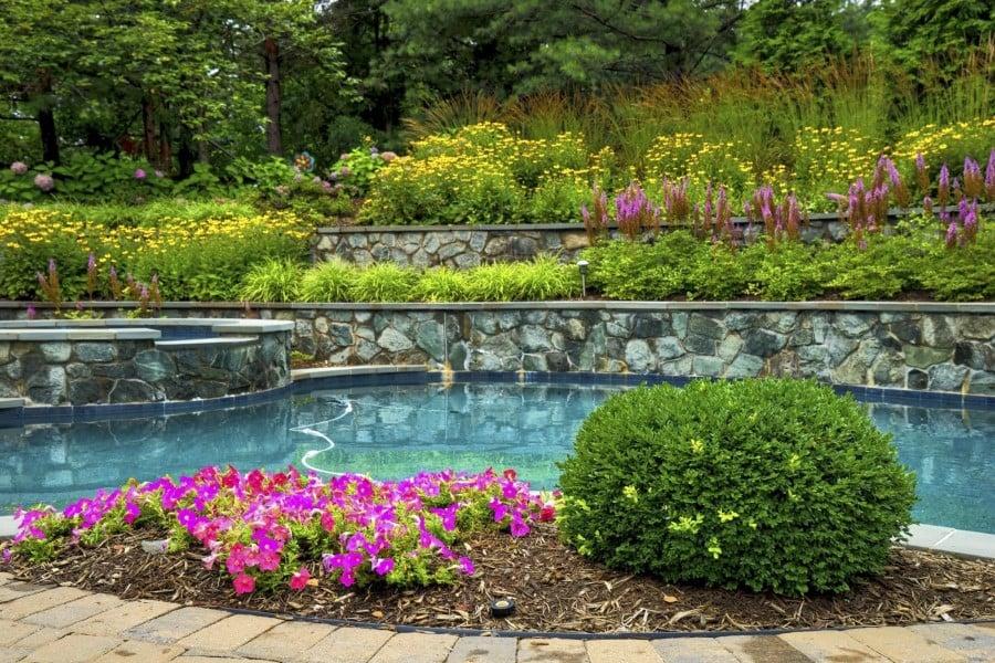 shrub poolside landscaping