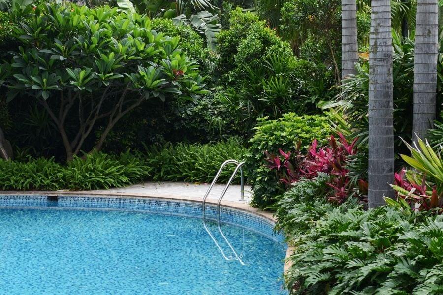 resort swimming pool around by plants