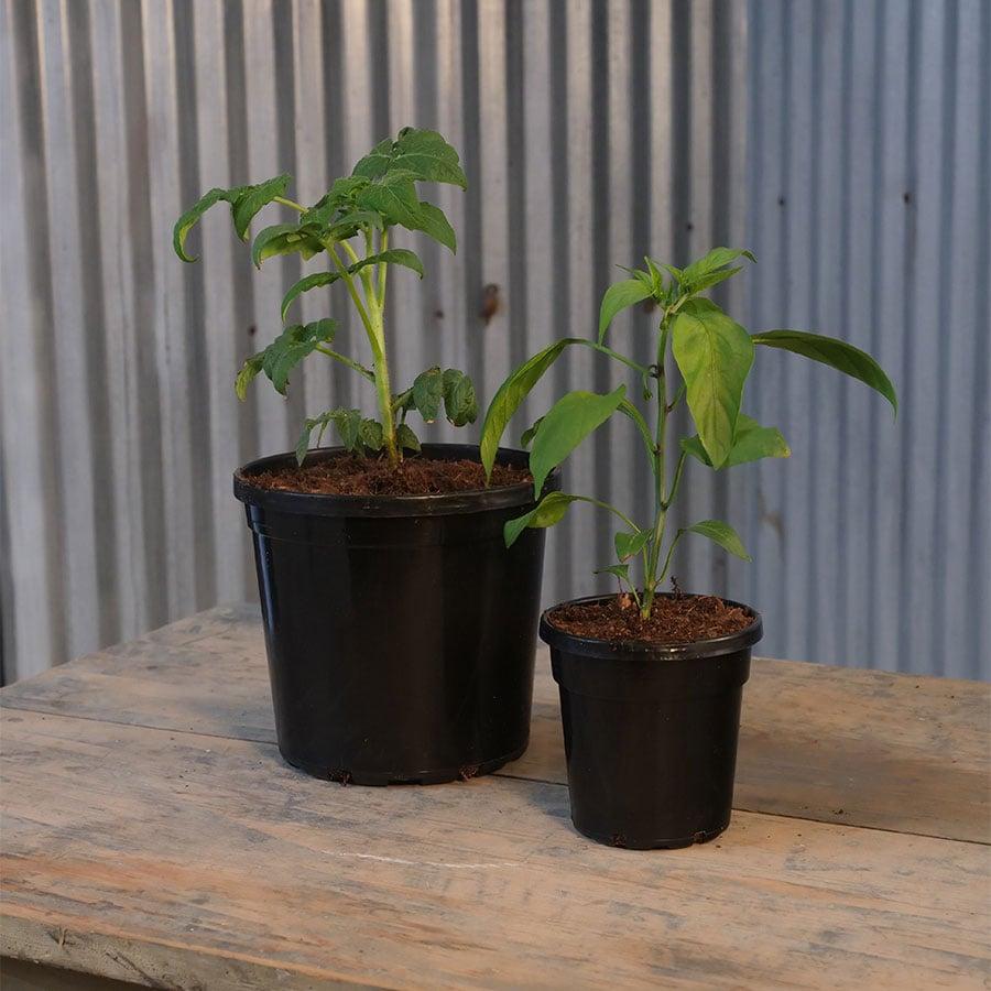 2 sizesof planter