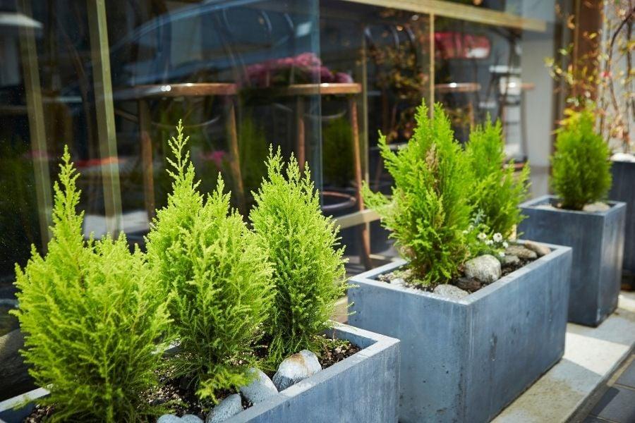 Plants in stone planter