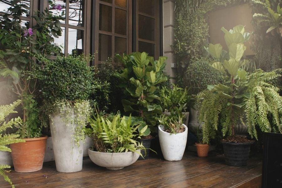 best pots for outdoor plants