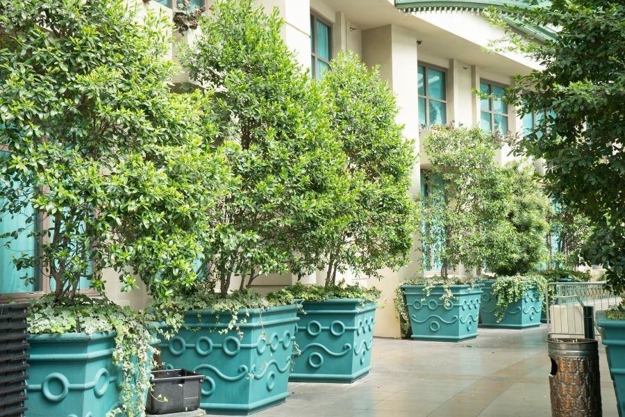 outdoor shot of pretty large potted tree
