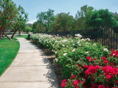 Landscape Ideas For Fence Line Perfection